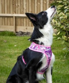 Boardies Wave Jumper Harness - Pink